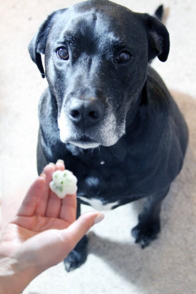 fresh breath dog begging