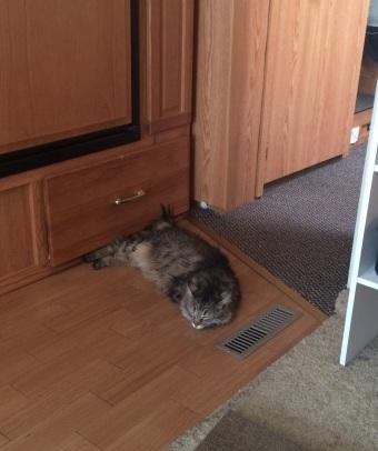 kitty laying kitchen